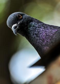 Bird-eye!