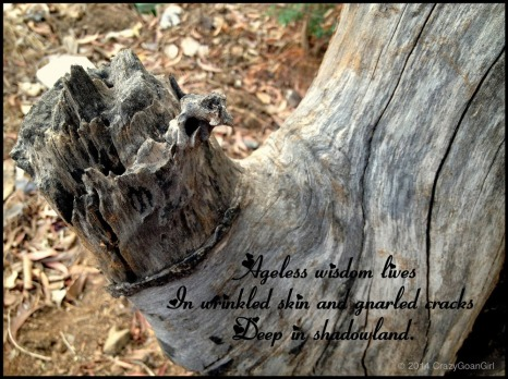 Scored Wisdom. I wrote this Haiku for NaPoWriMo 2013 and paired it with the image of an old, scored tree stump that screamed Character!