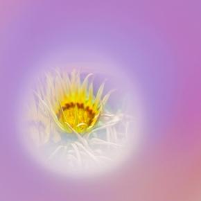 Flowering Peephole!