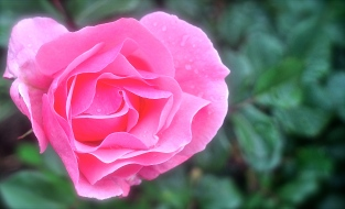 """A rose by any other name would smell as sweet"" - What could be more classic than The Bard eh?"