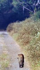 Leopard Spots!