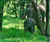 Mama & Baby in Bandipur...not the ones that charged!
